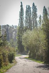 Dockton Forest-3.jpg