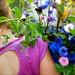 Caroline Plouff Cut Flowers by carolineplouff