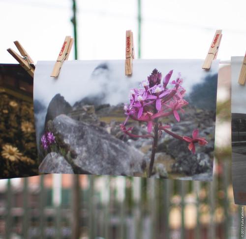 PARC Canon Foto Libre