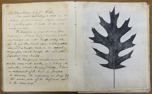PHOTO CREDIT: Photograph courtesy of courtesy of the John Leonard Riddell Collection, Manuscripts Collection, Louisiana Research Collection, Tulane University CAPTION: Phyllographic print from the journal of John Leonard Riddell; 1835; journal, volume 3