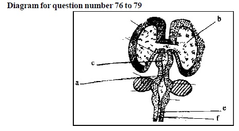 AIPMT Question Bank: Biology - Nervous Co-ordination