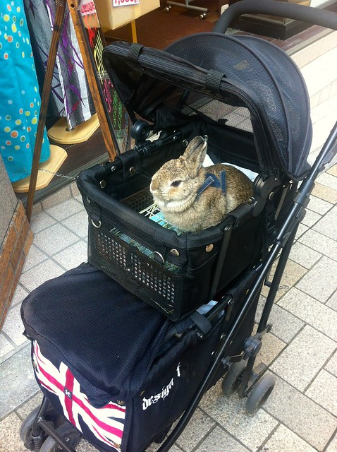 A random rabbit on the street in Kagura-zaka