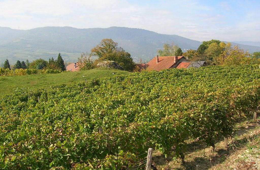 Paisaje de viñedos en los Alpes franceses. Autor, Semnoz