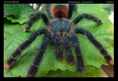 Your Tarantula and Spider pix.... - Page 3 8844971693_a07e2edd15