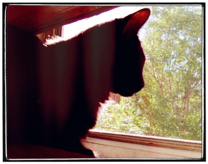 Lula in the window