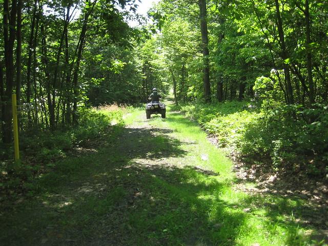 Buchanan State Forest