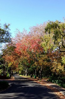 Autumn Colours - Cape Town
