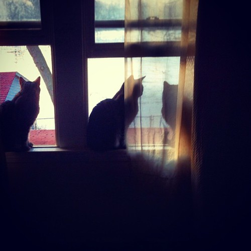 window watchers.