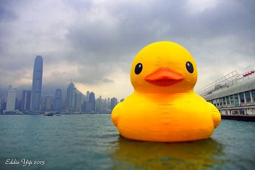 Rubber Duck - tiltshift