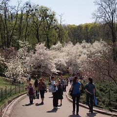 A.V. Fomin Botanical Garden