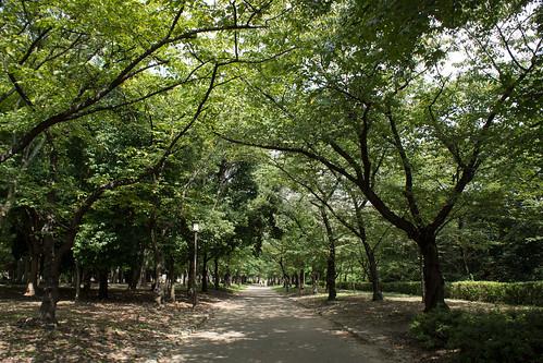 公園超級大, 四周都種滿了樹木
