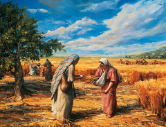 Ruth Gleaning in the Fields