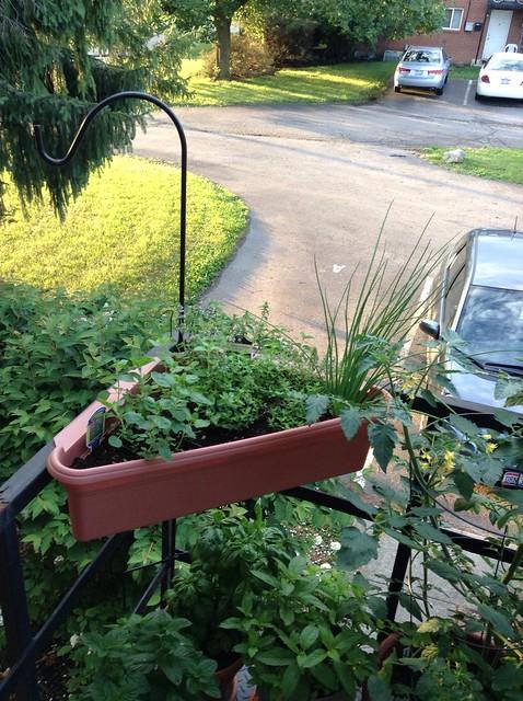 Corner box: oregano, thyme, chives