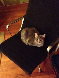 Miss Kitty on the Eames Aluminum Group Lounge.