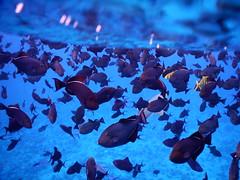 Bora Bora shark and ray tour