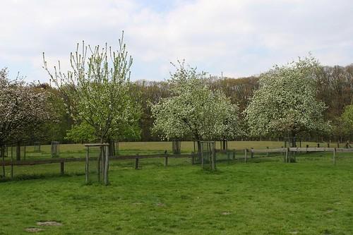 blossoms at trees