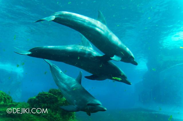 Marine Life Park Singapore - S.E.A. Aquarium - Dolphins 2