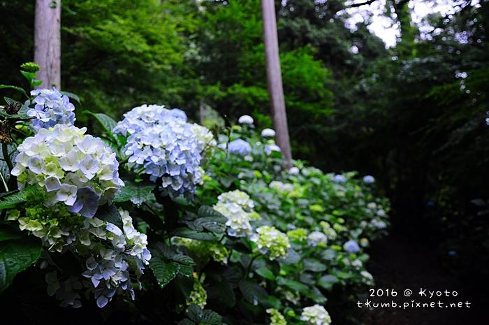 2016松尾大社 (6).JPG