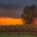 Sonnenuntergang by imhof.patrick