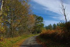 En chemin vers l'automne... - Photo of Cantaous