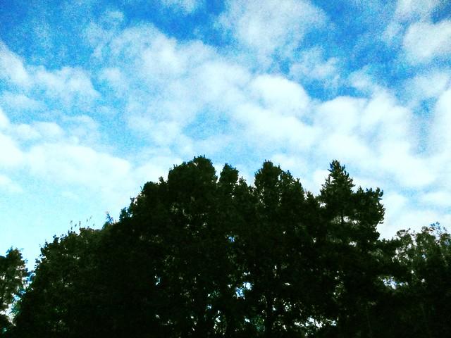 tree, Canon IXUS 175