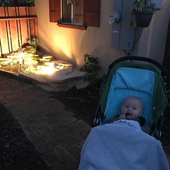 Walks after sunset and a bored baby gnawing on her stuffed calamari
