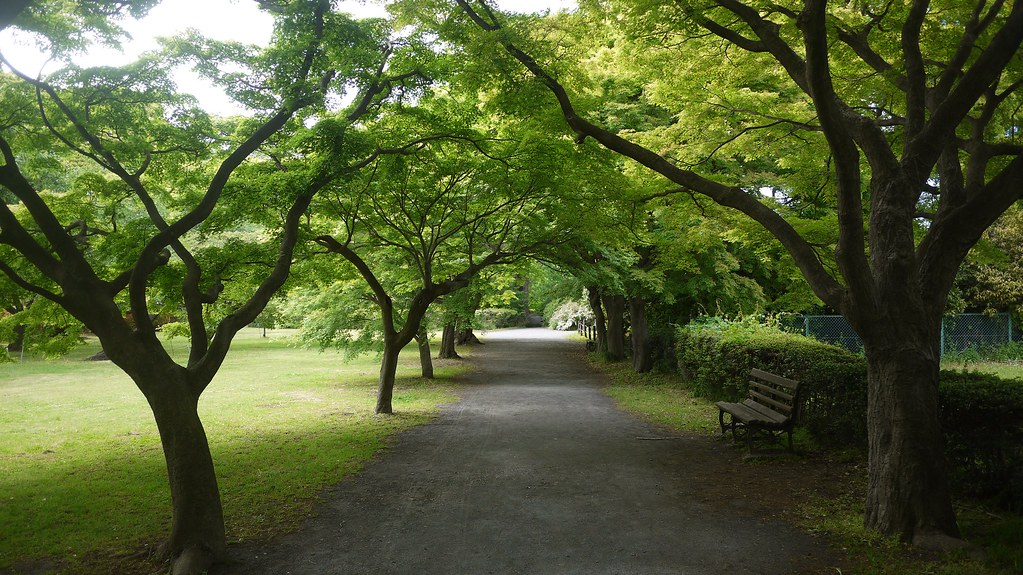 Koishikawa Botanical Gardens Avenue