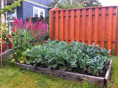 my 2013 garden (greens)