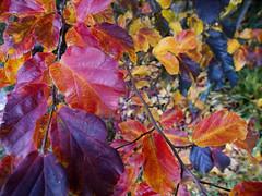 2013 Canberra Autumn