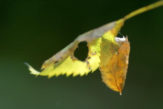 L' automne suspendue - The suspended autumn