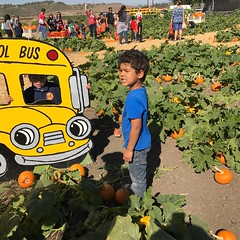I had a great time with Brooks, my oldest g'son, on his class trip to Underwood Farms. It was a family affair with my daughter, son-in-law and baby brother, Jude Austin. #brooksthekid #familylove:heart:️ #theangelosofcalifornia