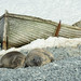 Two Seals by naturalturn