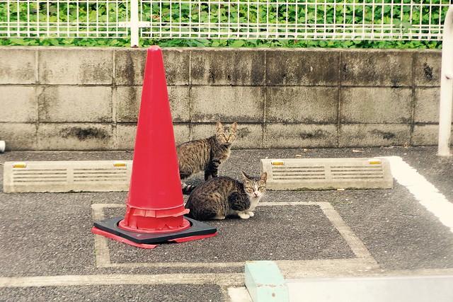 Today's Cat@2016-10-19