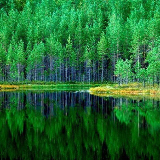 #foliage  #forest.. Green Like you've never seen.