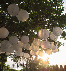paper orbs in the trees