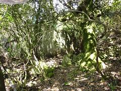 Le gros bloc à l'entrée des anciennes bergeries de Sapara Altagna