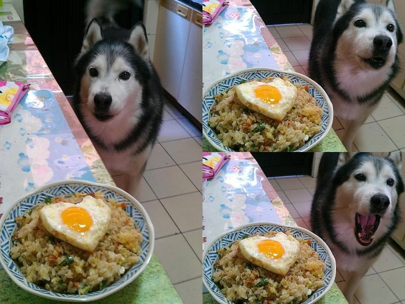 Doggy貪吃狗4盤4