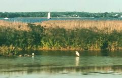 The egret watering hole. #birds #birdsofinstagram #NewJersey