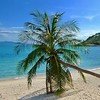 Thongson Bay, a little known and very special beach in the north-east corner of #kohsamui #beach #Thailand #samui #palm #coconut www.islandinfokohsamui.com