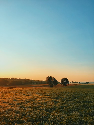 september summer trees wheat grass dew warm beautiful day bluesky sunny farm field morning iphone iphone6splus sunrise ifttt instagram