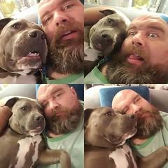 Snuggles! #bonnie_blue_staffy #bonnie_blue_bullie #staffysofinstagram #pitbullsofinstagram #dogsofinstagram #dontbullymybreed #endbsl #lovernotafighter #showmeyourpitties #daddysgirl #cuteness #menwithdogs #dudeswithdogs #dwd