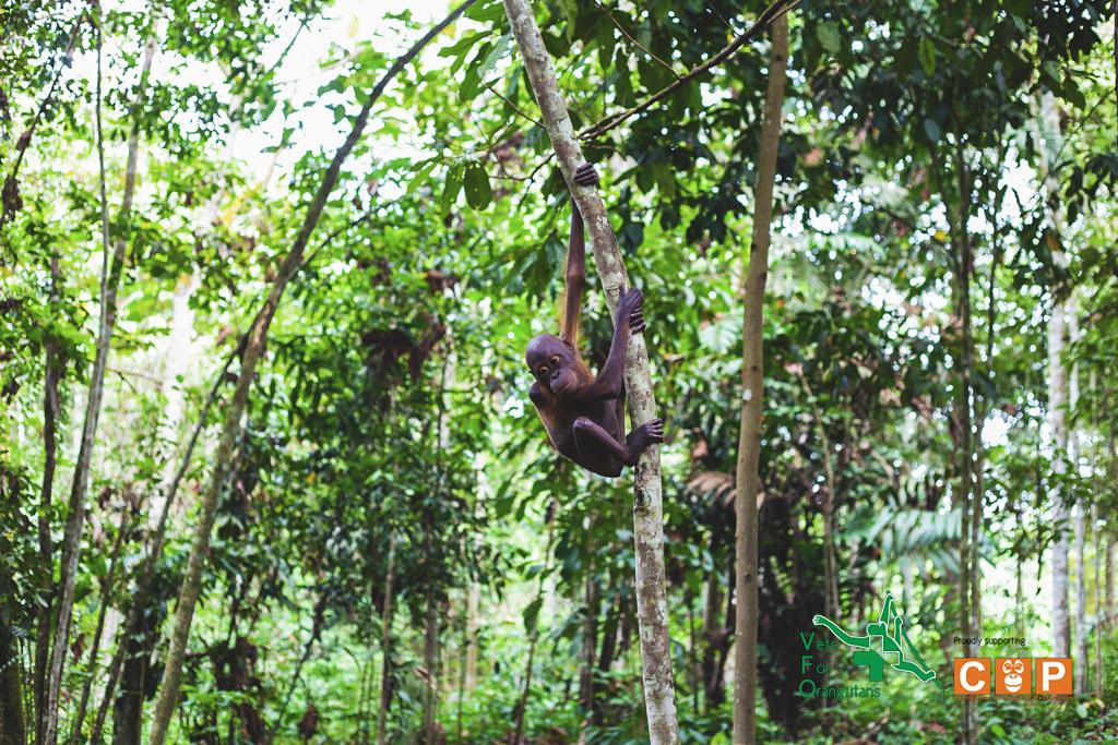 essays about tropical rainforest
