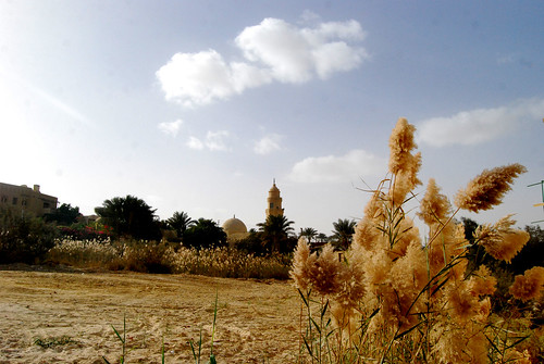 The Egyptian Countryside of Fayyoum