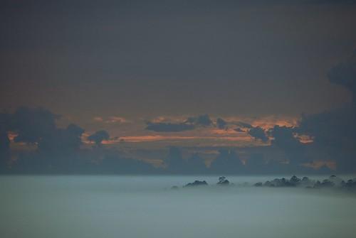 morning sky mist nature fog clouds dawn countryside scenery cloudscape sunup dawnlight treesinfog valleyfog sunlightthroughclouds morninglandscape