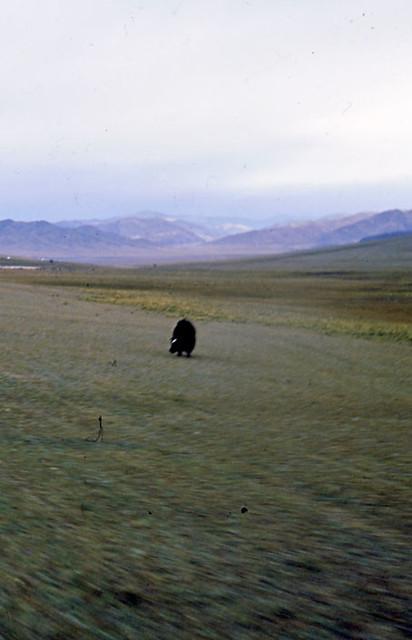 MONGOLIA-PAESAGGI-01-0016