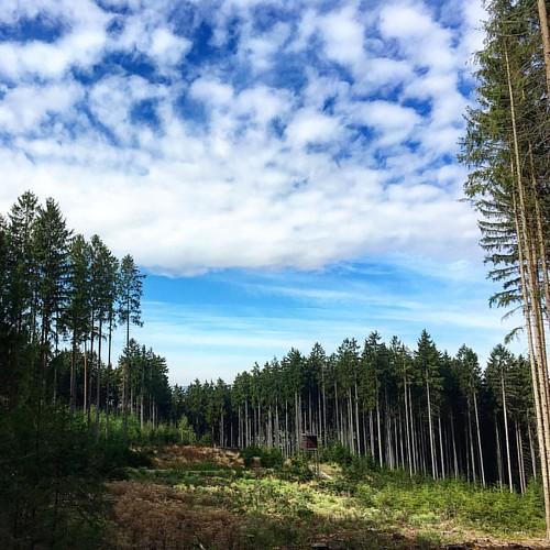 Im Schneckengrüner Wald...    #running66 #outdoor #nordicwalking
