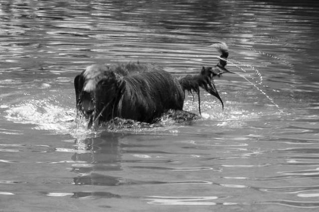 The monster Ness lake