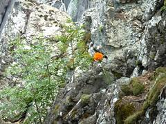Pause-déjeuner sur l'Andadonna : paysage bucolique de fleurs de montagne