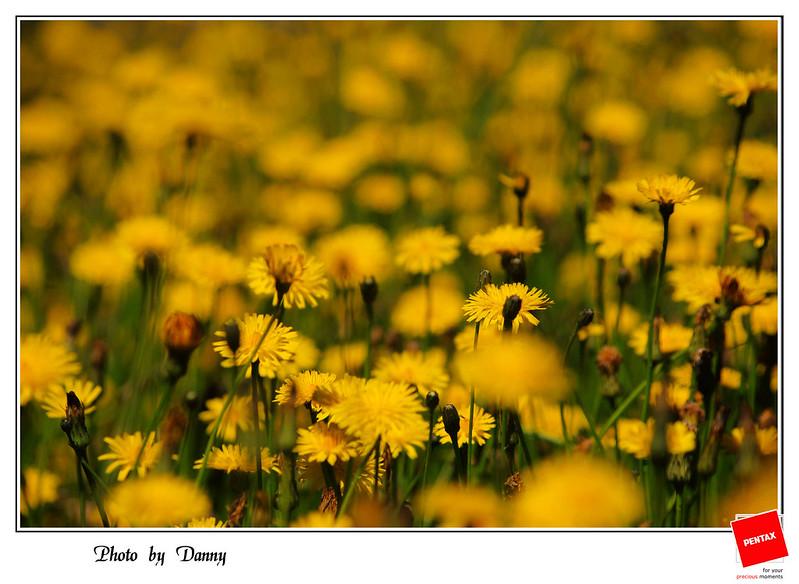 2012-夏天~來去福壽山-拈花惹草