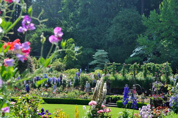 Butchart-gardens-sweet-peas